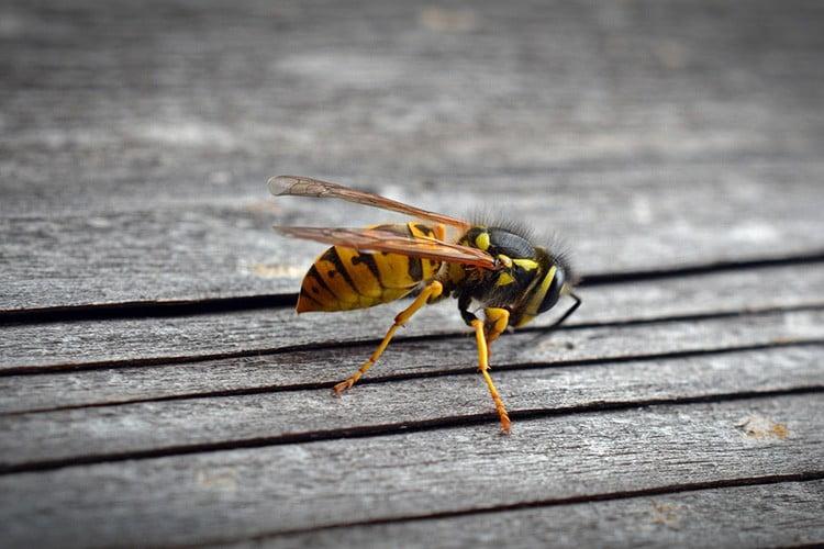 La vespa che