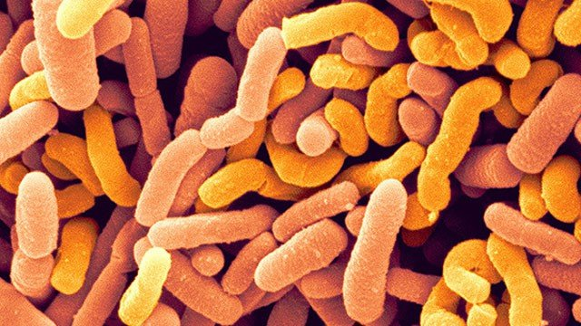 Intestino: alcuni dei nostri batteri intestinali hanno più di 15 milioni di anni