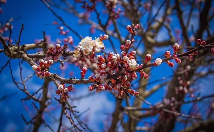 L'arrivo della primavera e la cattiva digestione