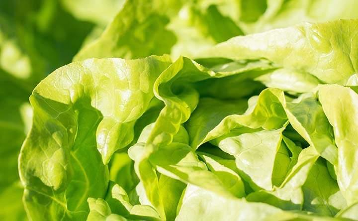 Noci, arance e lattuga: il segreto delle donne per mantenersi in buona salute