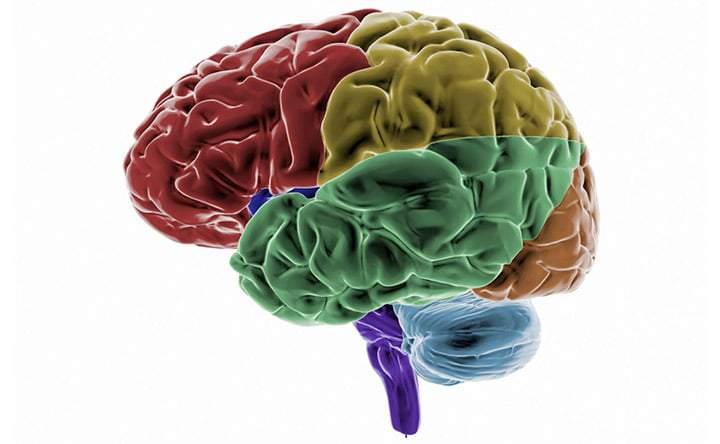 Personalità e cervello: quale legame c'è?