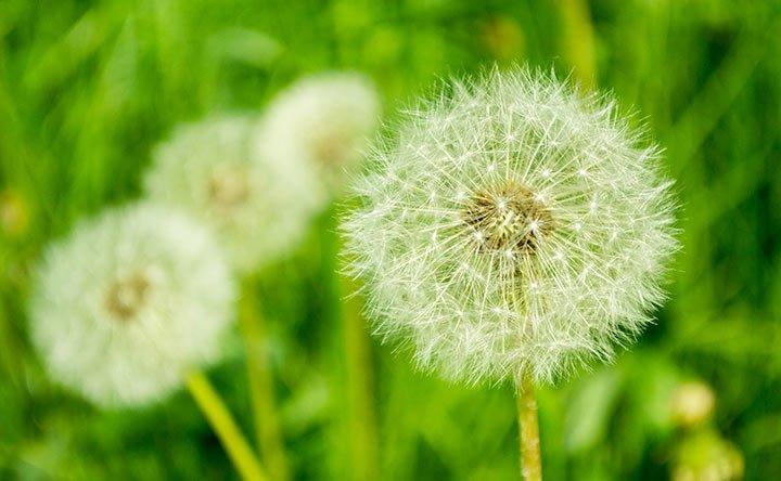 Allergie agli occhi: cause e rimedi