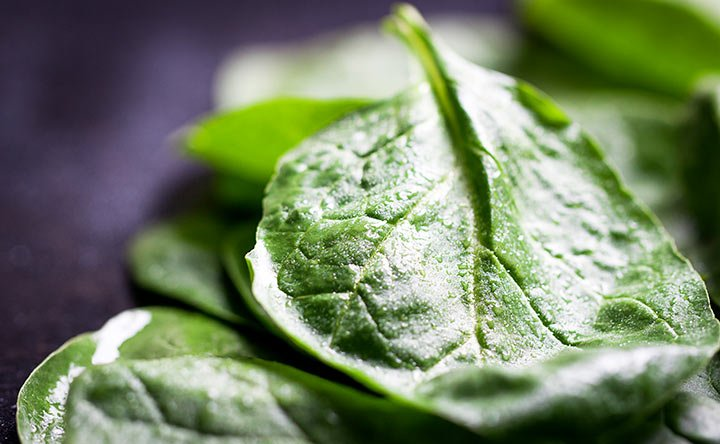 Spinaci, bietole e erbette. Il buono della terra in tavola