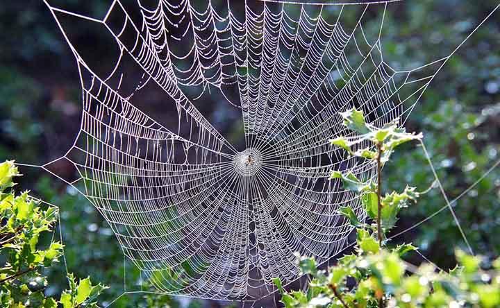 """I ragni possono """"volare"""" grazie ai campi elettrici"""