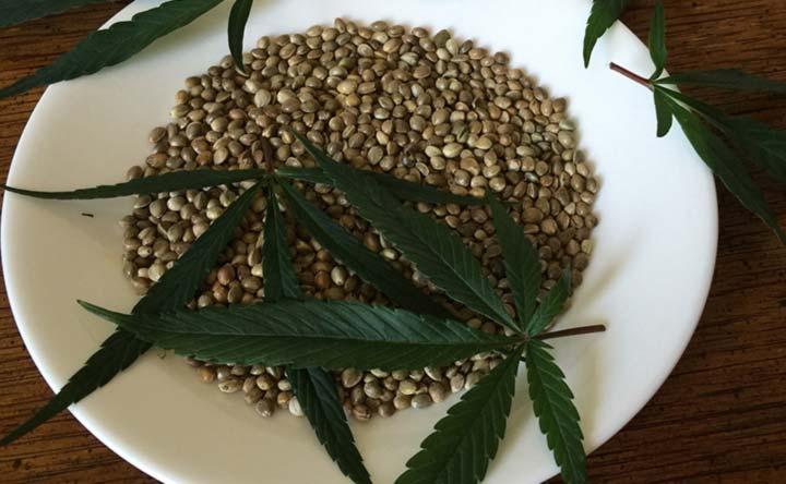 Scopriamo i semi di canapa