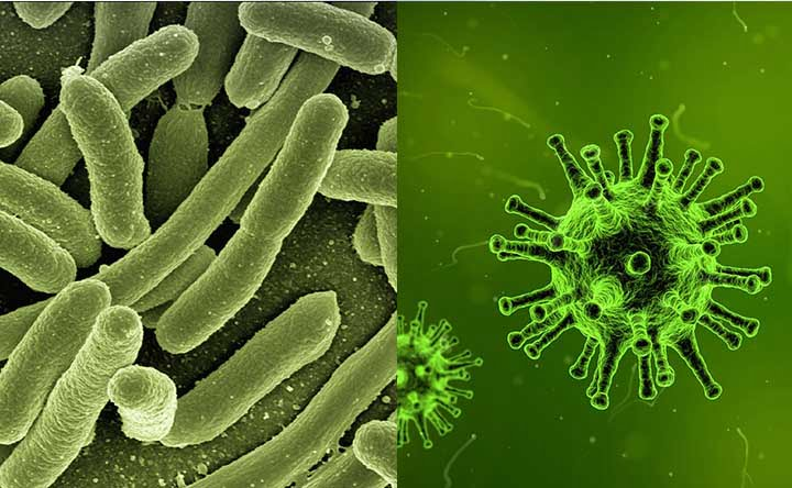 Come distinguere tra infezioni batteriche e infezioni virali?