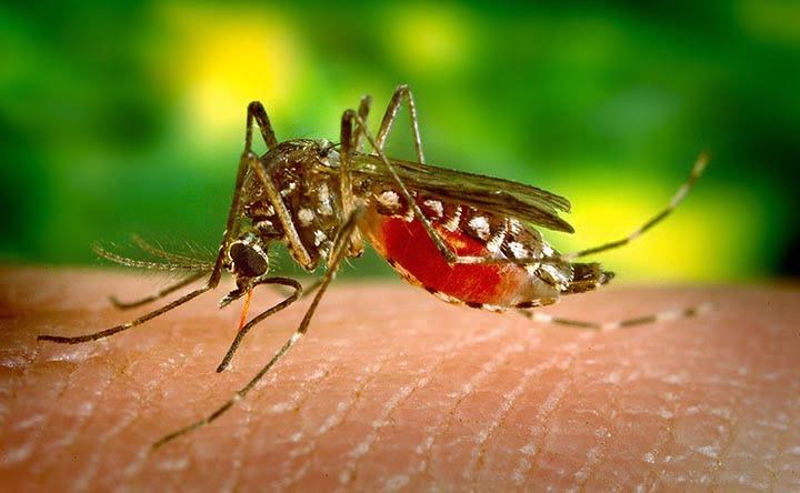 Creato un modo sicuro e non tossico per uccidere le zanzare